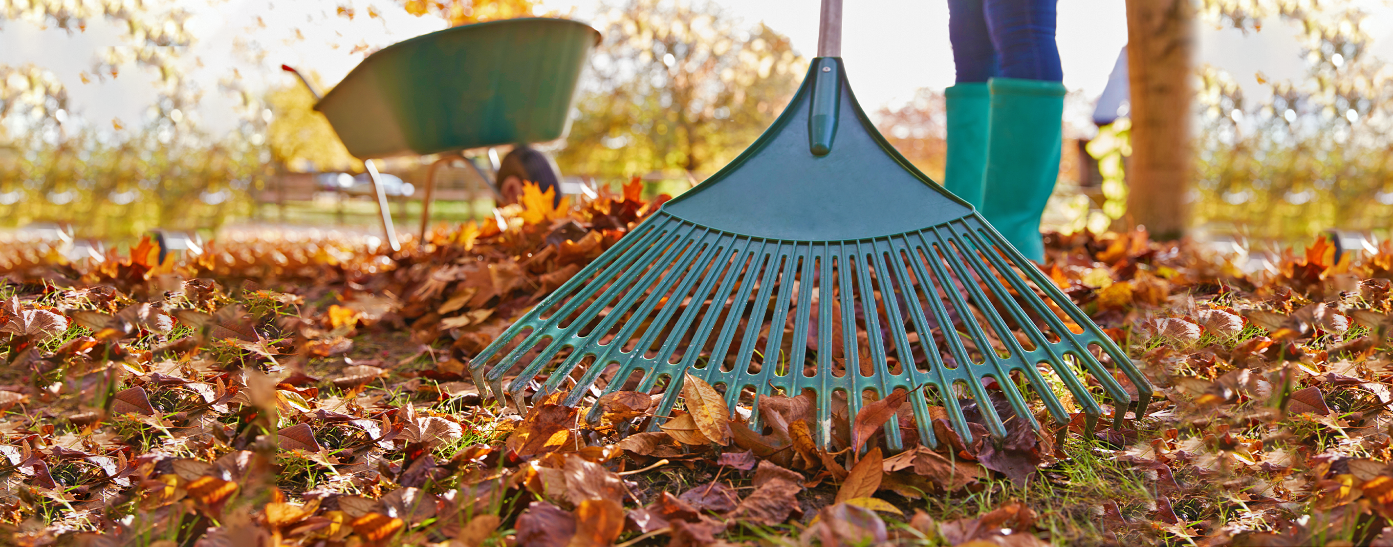 Dependable Lawn Care Fall Clean Up