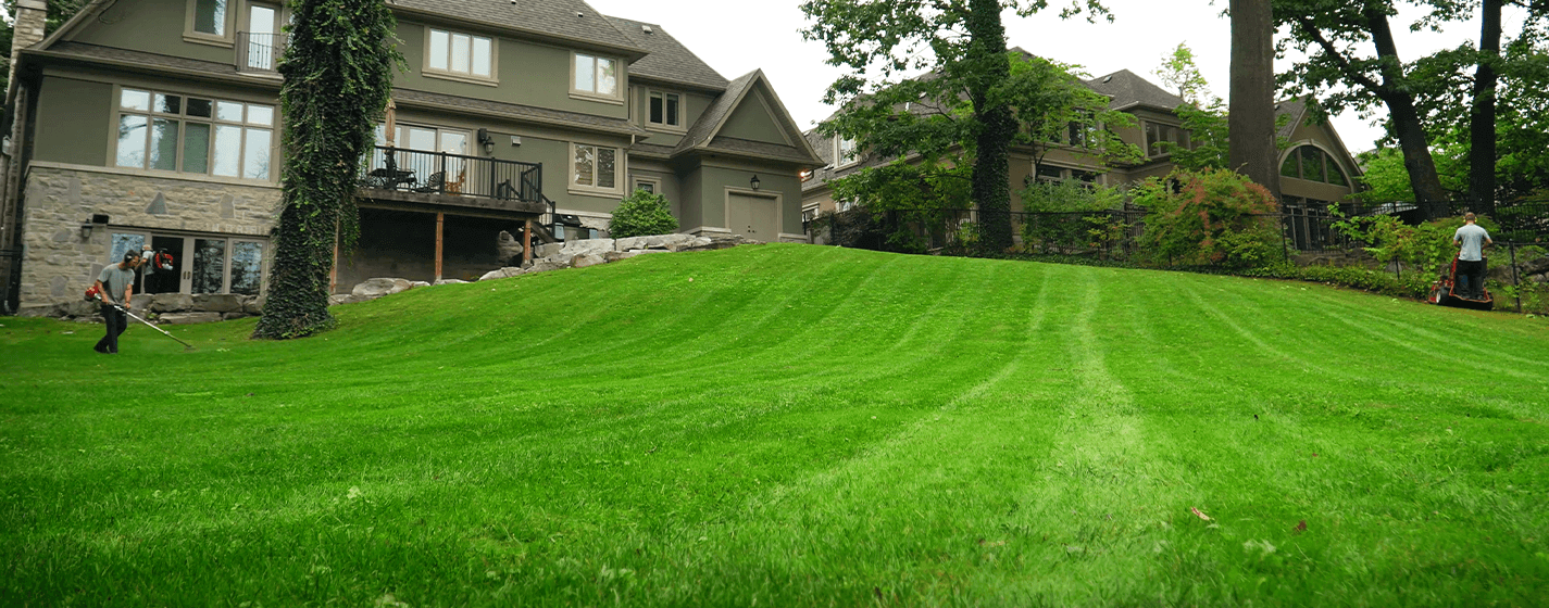 Dependable Lawn Care Weekly Lawn Care oakville mississauga