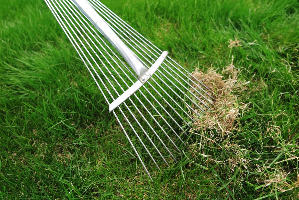 Our Guide to Achieving Your Dream Lawn